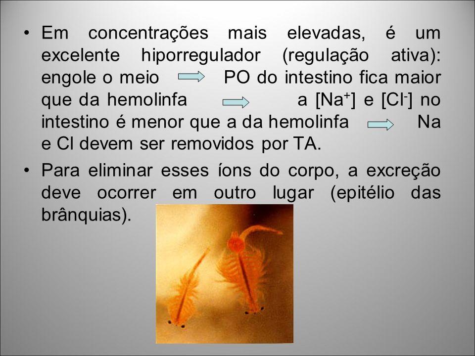 Em concentrações mais elevadas, é um excelente hiporregulador (regulação ativa): engole o meio PO do intestino fica maior que da hemolinfa a [Na+] e [Cl-] no intestino é menor que a da hemolinfa Na e Cl devem ser removidos por TA.